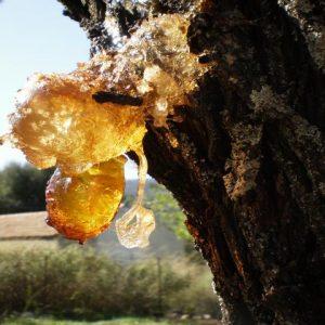 Gum Almond