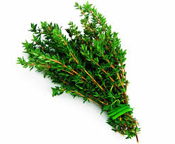 Thyme is one of the oldest medicinal plants, so ancient Egyptians and ancient Greeks used thyme to treat their illnesses. The properties of the thyme are almost the same, but we have listed each one separately here to make it more practical.  Zataria multiflora boiss has a second and second degree warmth and dry nature.  Properties and effects of thyme  Thyme is effective in treating Oxycardia; daily eating a teaspoon of thyme powder is useful for treating and eliminating intestinal worms for one to two weeks. Anti-bloat and appetite. Cleanses the lungs, stomach, liver and intestines from moisture. Eating thyme with fig juice is useful for treating some types of cough. Eating Thyme with a Dry Fig will make your skin look good. Thyme consumption with fresh cheese in lean subjects can lead to weight loss. Eating Thyme with thick foods that have a high digestion can improve digestion. Thyme contributes to the escape of vermin. Thyme is used for treating some types of stomach discomfort. Consumption of thyme in the form of food, improves symptoms in the cold. Fungal Thyme and Bronchial Antispasmodic. To treat asthma and remove sputum from the breasts, take a cup of tea once a day. Mix thyme with lemon juice and a little sugar, stir well and stir and continue until recovery. Thyme has anti-bacterial, antifungal, and anti-parasitic properties.